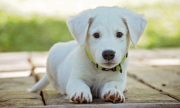 Maple Hill Senior Organizes Cutest Pet Contest