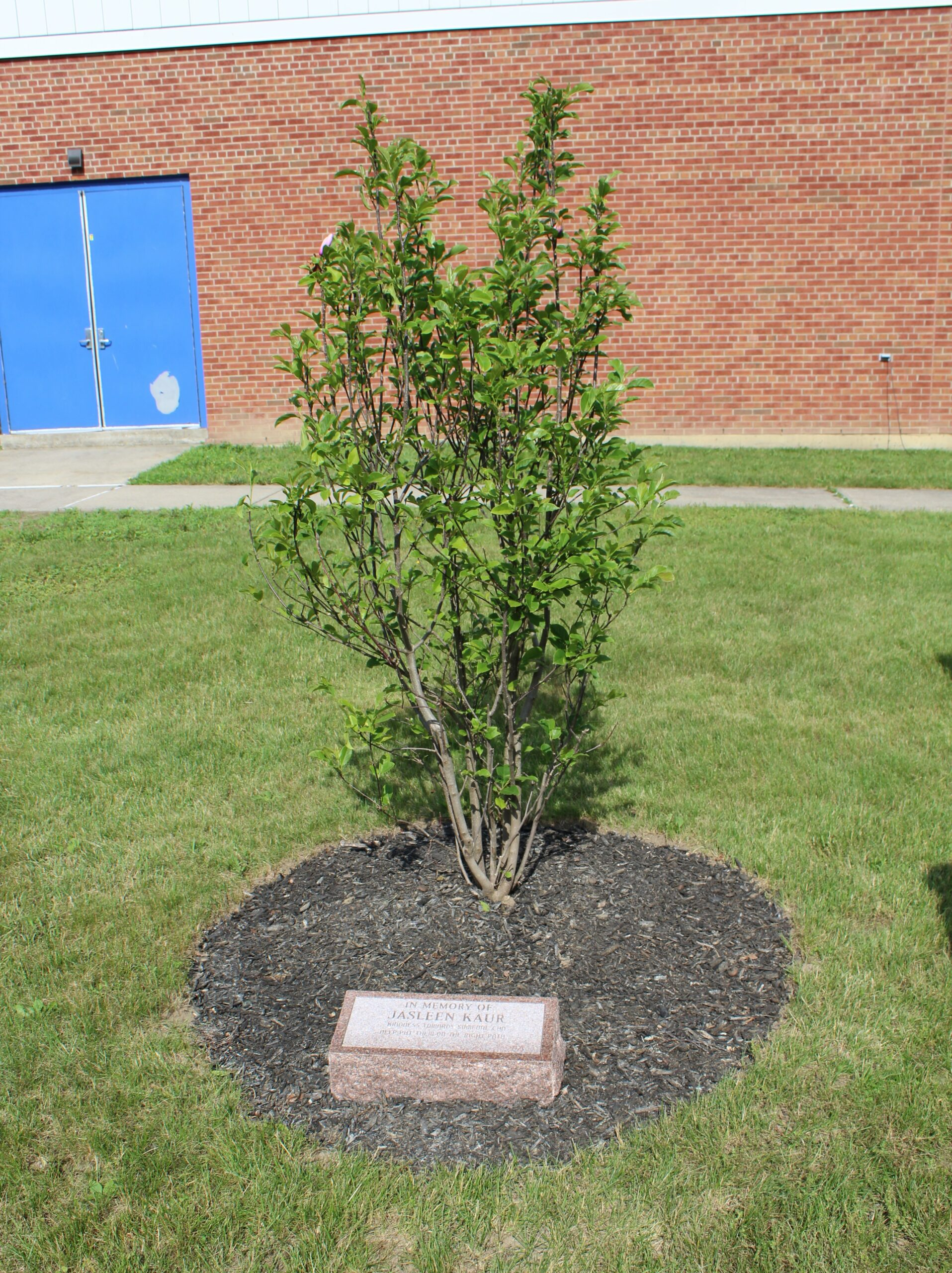 tree and memorial stone